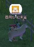 neta_20090405 (6).JPG